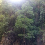 Phang Nga Bay mangrove cove